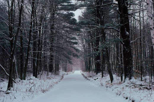 Stock Photo: 47-2095D Trees along a pathway during Winter
