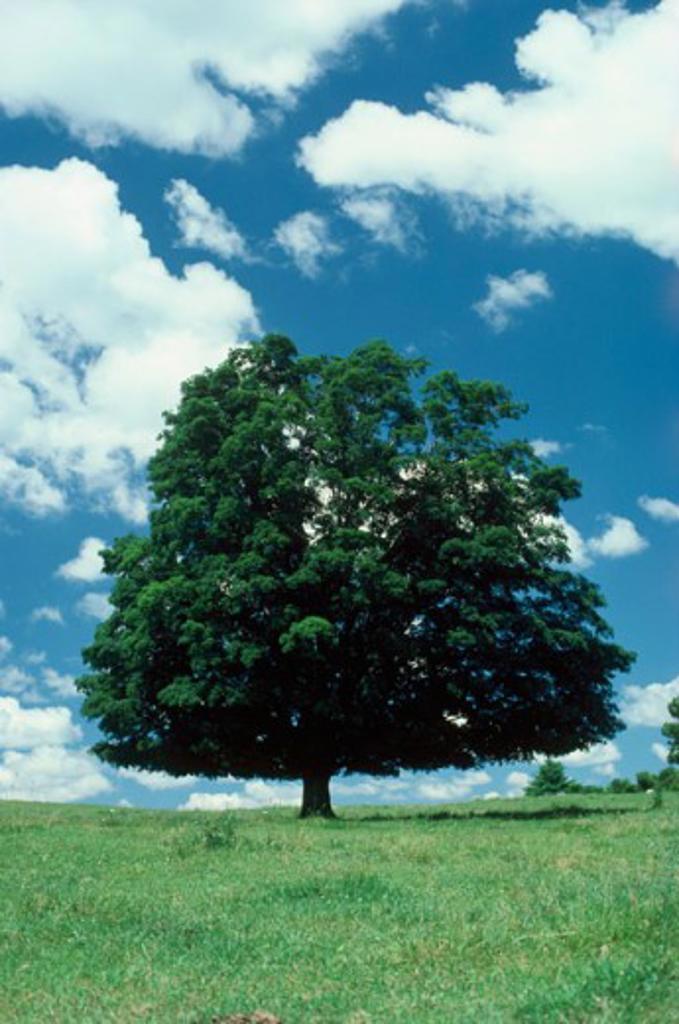 Stock Photo: 47-2871A Tree on a landscape