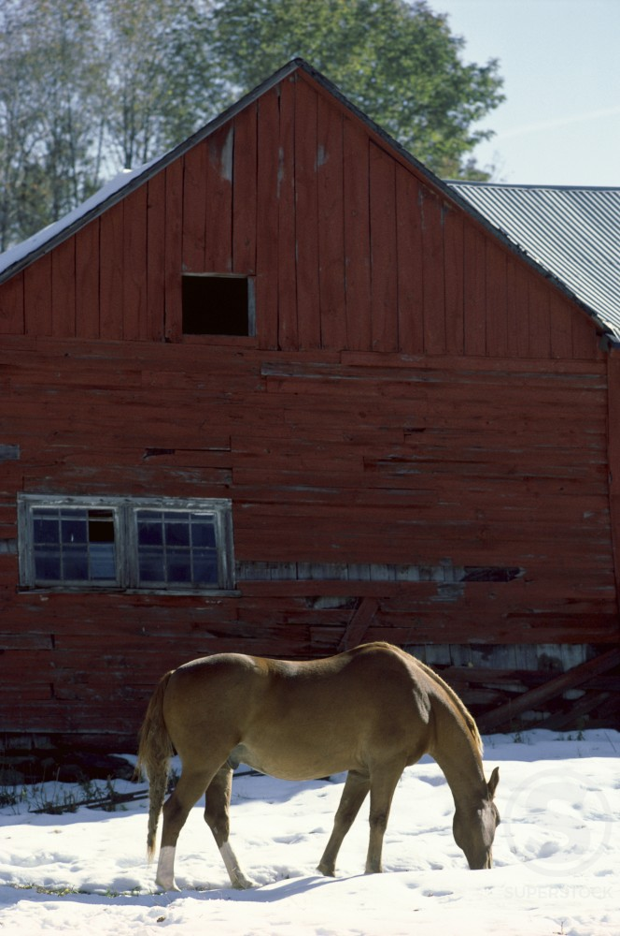 Stock Photo: 47-4854 Horse