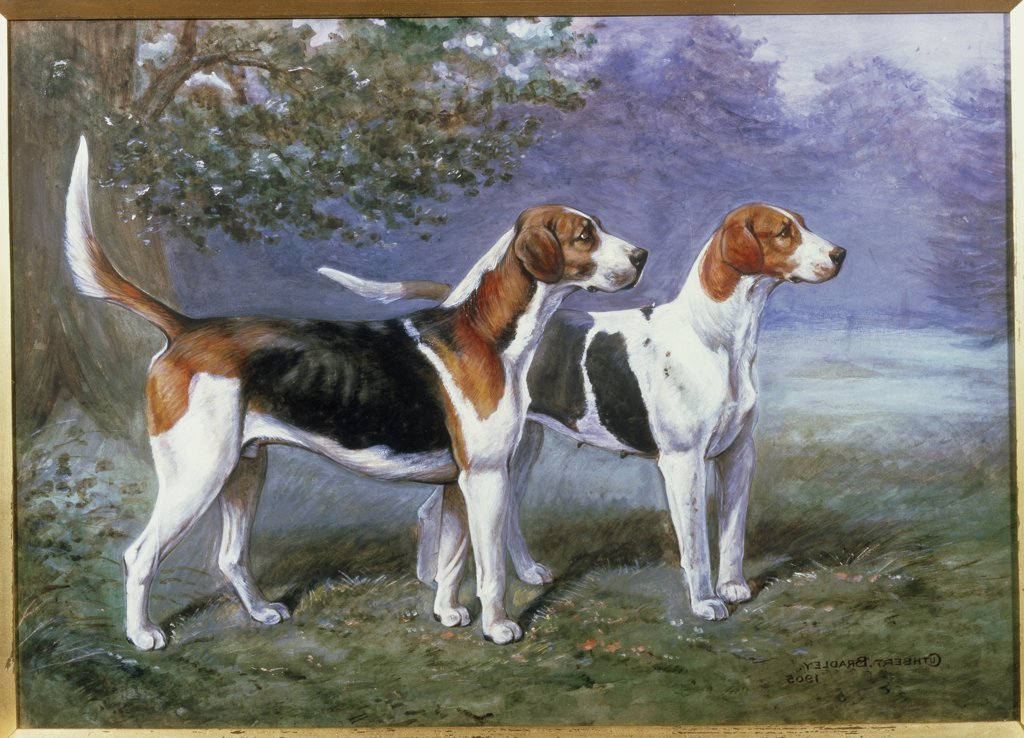 A Bitch & Dog Hound In A Landscape 