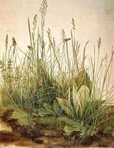 The Great Piece of Turf  1503 Albrecht Durer (1471-1528/German) Watercolor Albertina Graphic Collection, Vienna  : Stock Photo