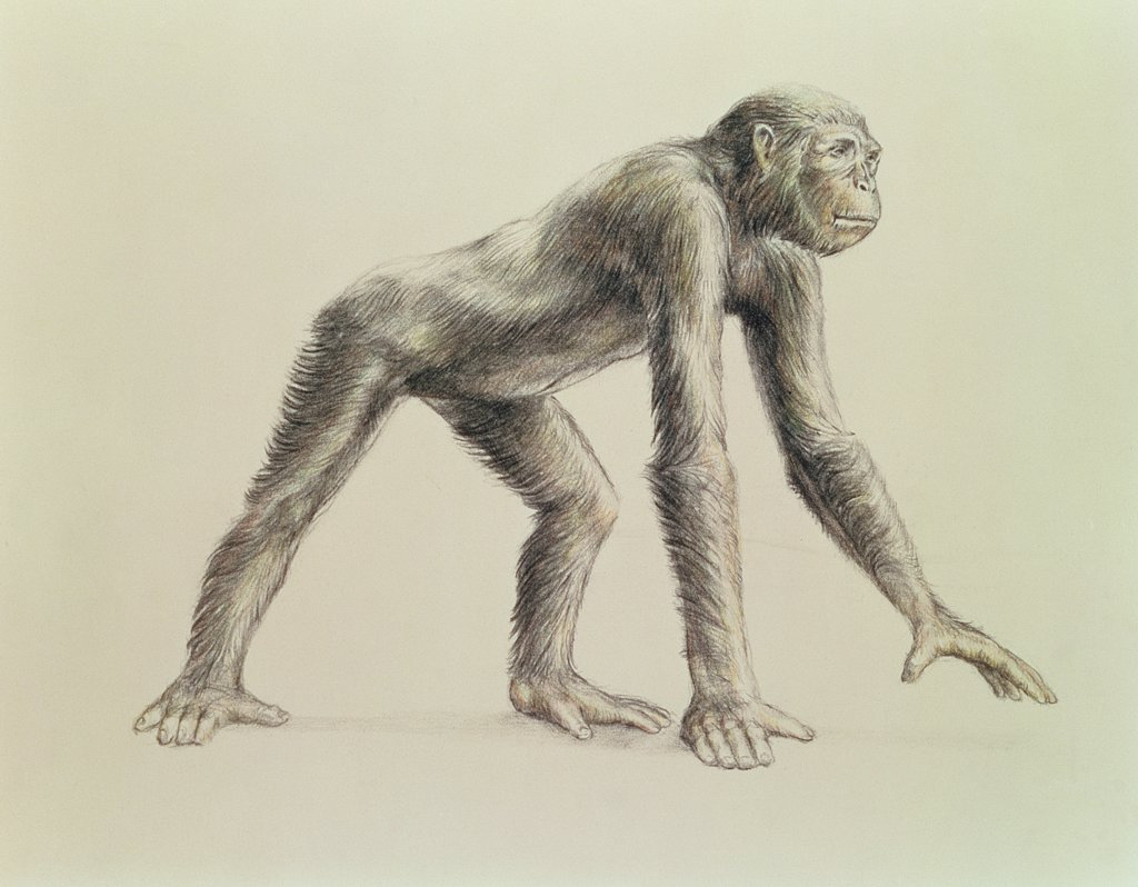 Stock Photo: 475-2272 Dryopithecus Africanus