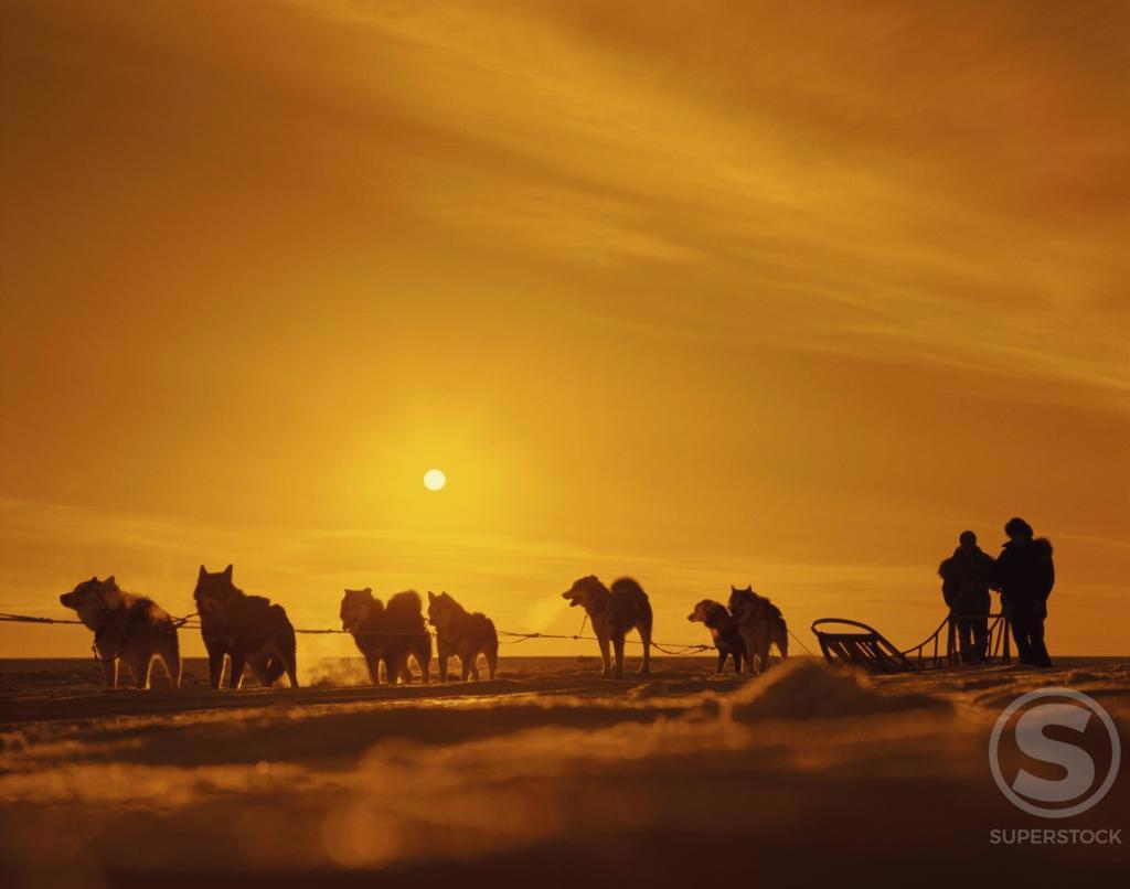 Stock Photo: 491-656 Frozen Bering Sea Nome Alaska USA