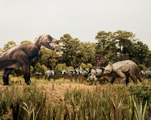 Stock Photo: 608-227 Tyrannosaur standing in front of a group of triceratops in a field