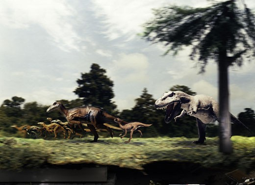 Side profile of a tyrannosaur attacking a group of anatosaurus : Stock Photo
