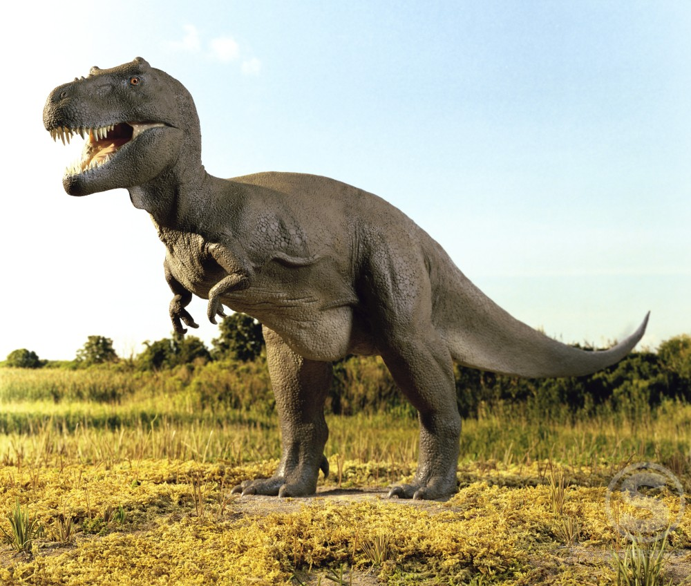 Close-up of a tyrannosaurus rex standing in a field : Stock Photo