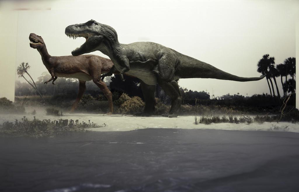 Stock Photo: 608-235 Side profile of a tyrannosaurus rex chasing an albertosaurus