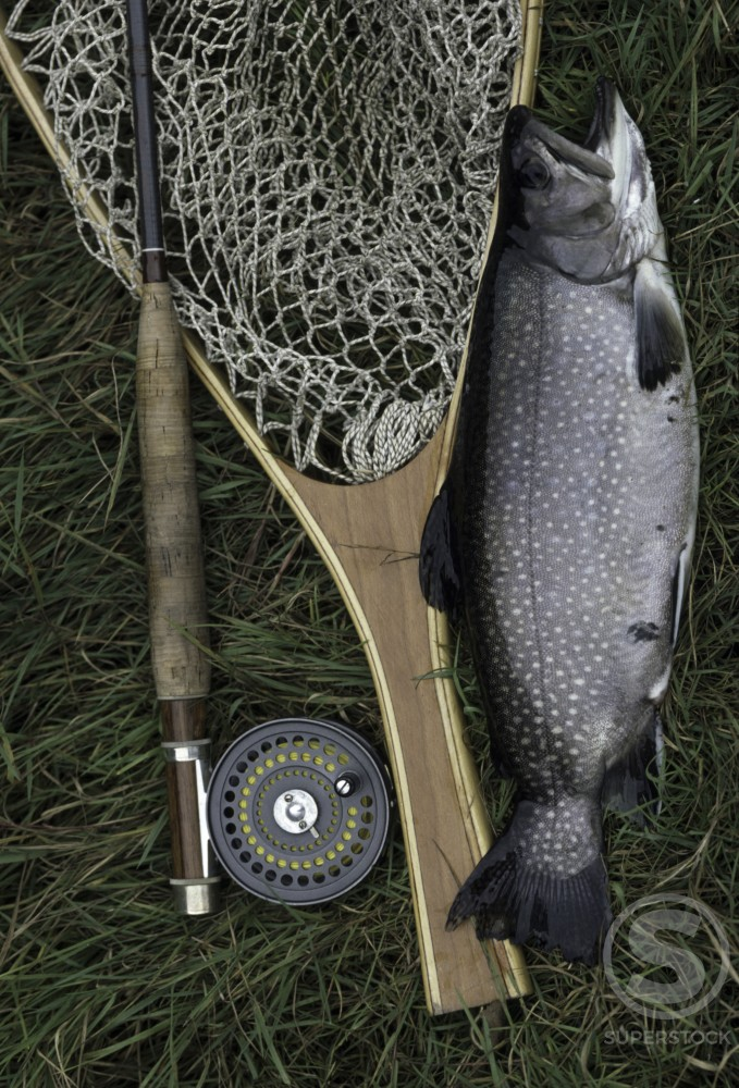 Fishing rod and a net with a catch on the grass : Stock Photo