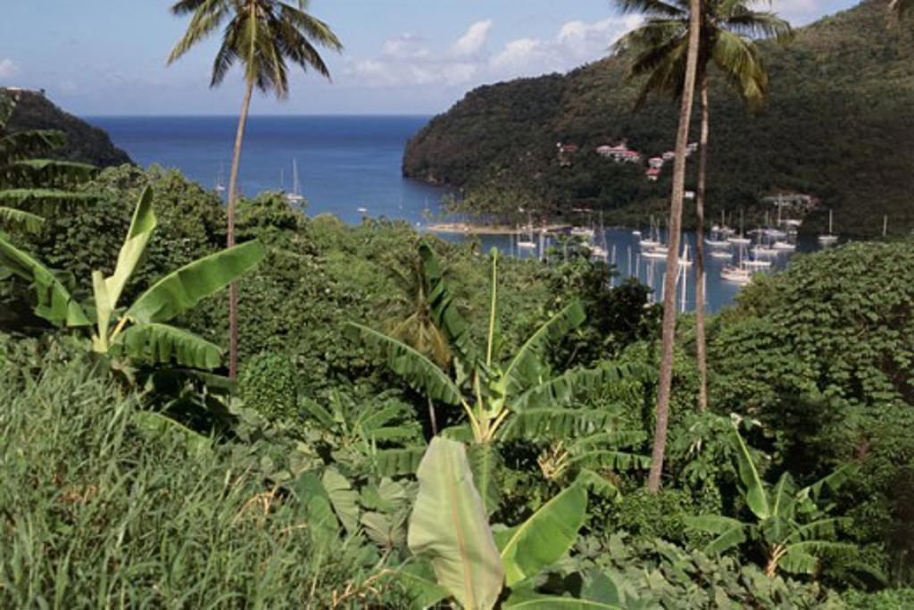 Marigot Bay St. Lucia : Stock Photo