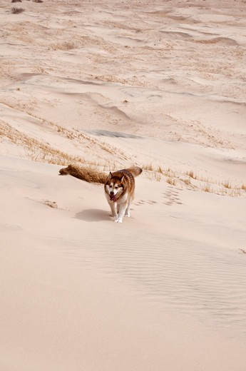 Stock Photo: 647-2041 USA, California, Mojave National Preserve, Kelso dunes