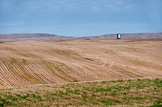 Harvested wheat field, Saskatchewan, Canada : Stock Photo