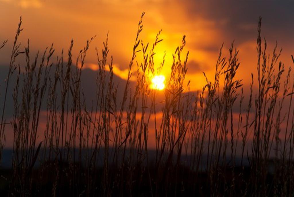 Stock Photo: 647-2329 USA, Montana, Sunset over Prairie