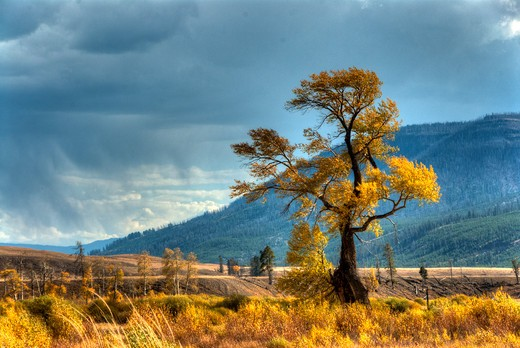 Stock Photo: 647-2331 USA, Wyoming, Yellowstone National Park, Lamar Valley