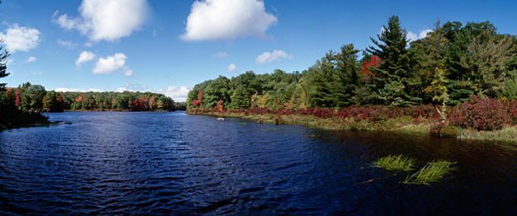 Trees at the lakeside, Egypt Meadow Lake, Bruce Lake Natural Area, Pennsylvania, USA : Stock Photo