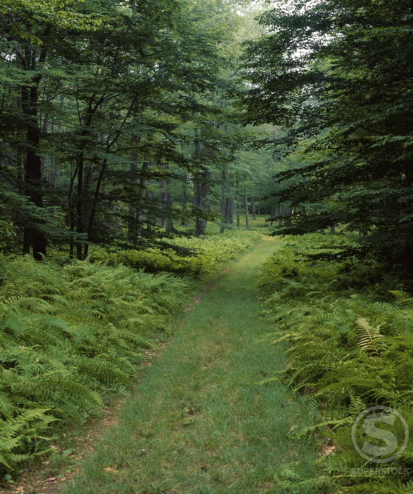 Delaware State Forest