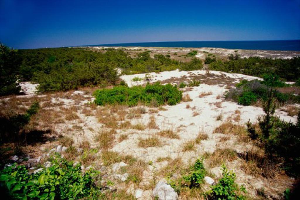 Stock Photo: 655-1634 Cape Henlopen State Park Delaware USA