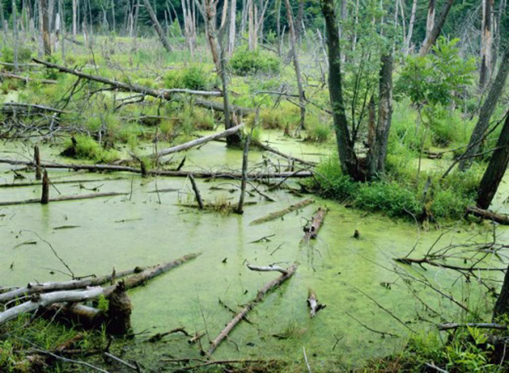 Delaware Water Gap National Recreation Area Pennsylvania USA : Stock Photo