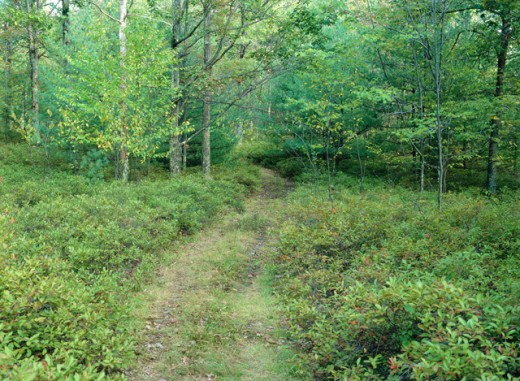 Stock Photo: 655-1794 Delaware State Forest Pennsylvania USA