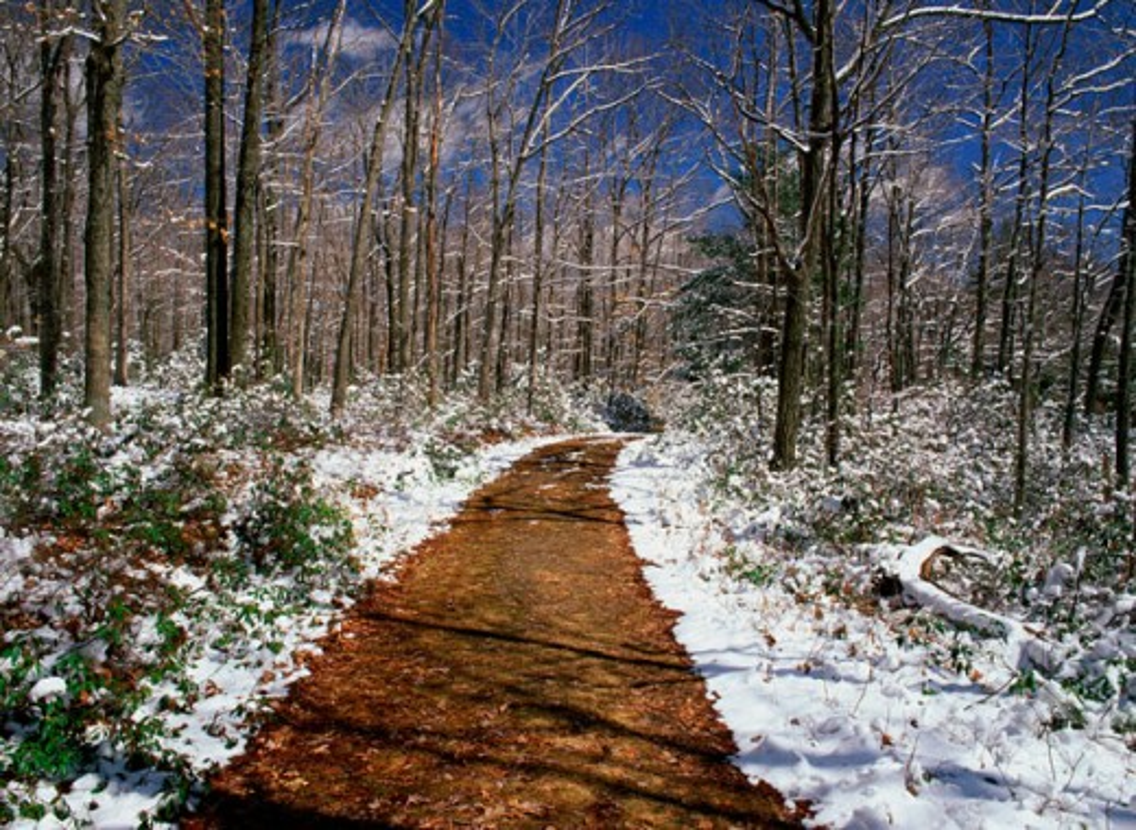 Stock Photo: 655-1870 Bruce Lake Natural Area Pennsylvania USA