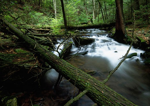 Stock Photo: 655-1931 Stream flowing through a forest, Pennsylvania, USA
