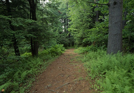 Trail passing through a forest, White Memorial Conservation Center, Litchfield, Connecticut, USA : Stock Photo