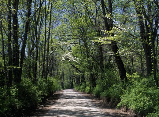Road passing through a forest, Delaware Water Gap National Recreation Area, New Jersey, USA : Stock Photo