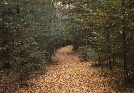 Trees in a forest, Delaware Water Gap National Recreation Area, New Jersey, USA : Stock Photo