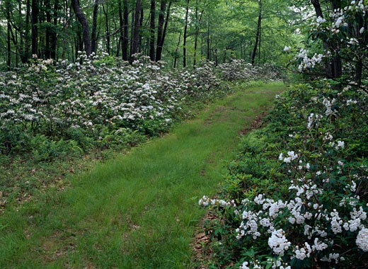 Stock Photo: 655-825 Grass covered trail in a forest, Delaware State Forest, Pennsylvania, USA