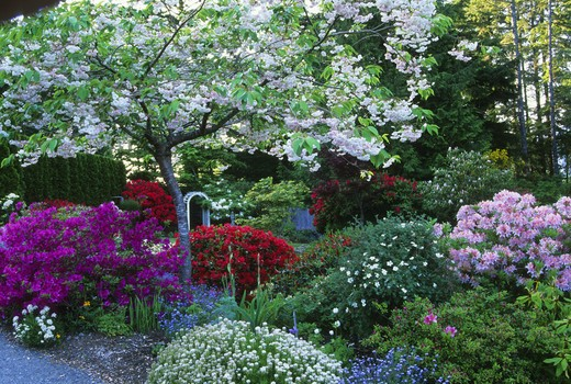 Stock Photo: 662-2449 Variety of flowers in domestic garden