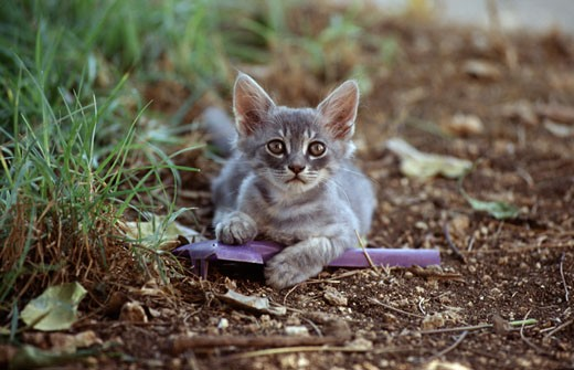 Kitten playing with a plastic toy : Stock Photo