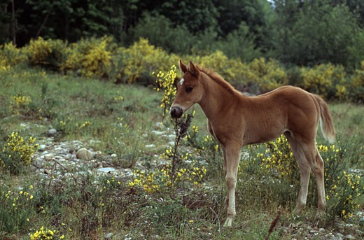 Foal standing in a field : Stock Photo