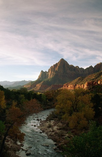 Stock Photo: 805-6384C River flowing through a forest, Virgin River, Watchman Peak, Zion National Park, Utah, USA