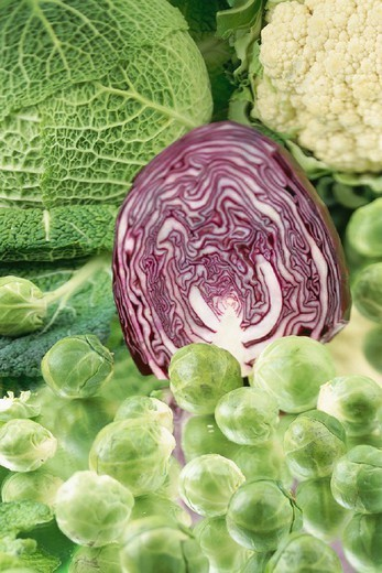 CABBAGE : Stock Photo