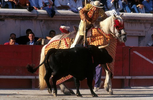 Stock Photo: 824-113772 BULL FIGHT. BULL FIGHT The corrida in Nîmes, France. The picador is a horseman who assists the torero by stabbing the bull with his lance.
