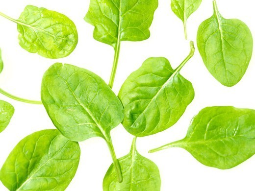 SPINACH. SPINACH Worldwide distribution except for South Africa Spinach leaves. : Stock Photo