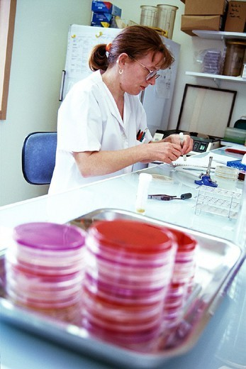 LABORATORY WORKER. LABORATORY WORKER Photo essay. Chatellerault Hospital (Camille Guérin Hospital) in the French department of Vienne. Bacteriology laboratory: bacteria culture. : Stock Photo