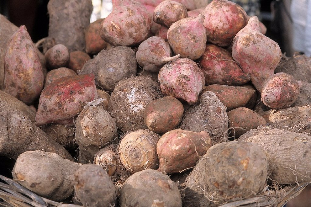 EXOTIC VEGETABLE. EXOTIC VEGETABLE Sweet potatoes. : Stock Photo