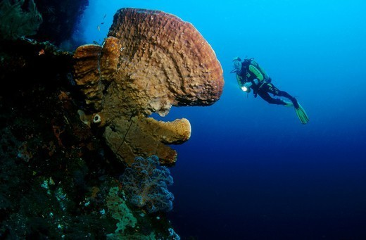 Stock Photo: 824-29666 DIVING. DIVING Worldwide distribution except for United Kingdom and Germany.