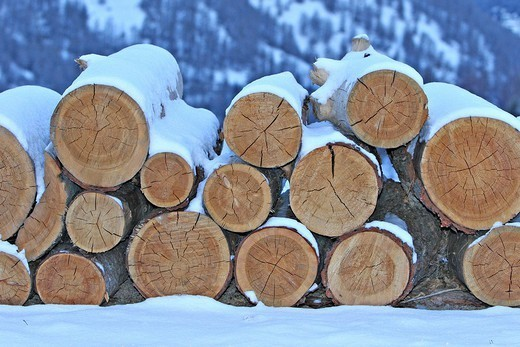 Stock Photo: 824-30466 WOOD. WOOD Wood cut in the Queyras. Department of Hautes_Alpes, France.