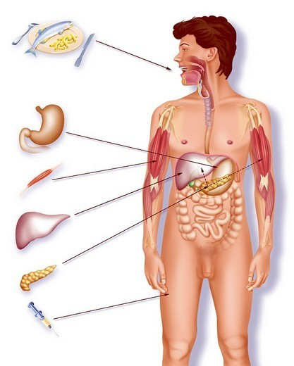 Stock Photo: 824-30958 TREATMENT FOR DIABETES. TREATMENT FOR DIABETES Medical treatment for diabetes. Illustration of the different medical treatments for diabetes. From top to bottom:  - proper diet  - alpha-glucosidase inhibitors to slow absorption of glucose in the stomach  - biguanides to improve insulin action  - sulfonylurea drugs to increase the secretion of insulin by the pancreas  - insulin injections to counteract a lack of natural insulin.