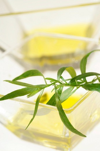 OLIVE OIL. Olive oil with tarragon. : Stock Photo