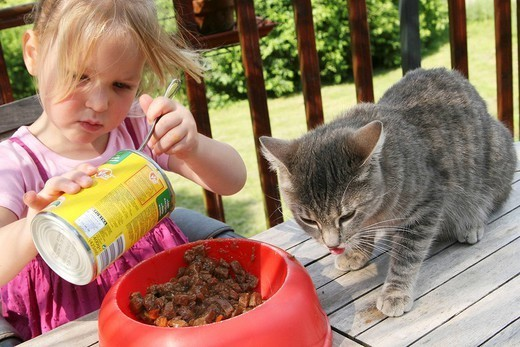 Stock Photo: 824-37371 CHILD WITH ANIMAL. CHILD WITH ANIMAL Girl and her cats.