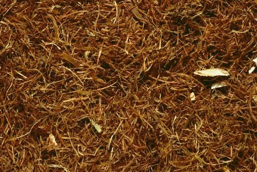 CORN. CORN Stigmata maidis, commonly called cornsilk. Dried corn pistils. : Stock Photo