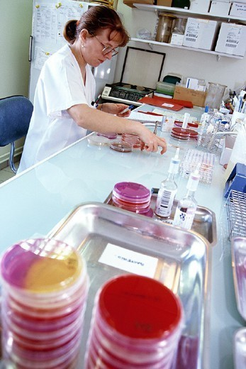 LABORATORY WORKER. LABORATORY WORKER Photo essay. Chatellerault Hospital (Camille Guérin Hospital) in the French department of Vienne. Bacteriology laboratory: bacteria cultures. : Stock Photo