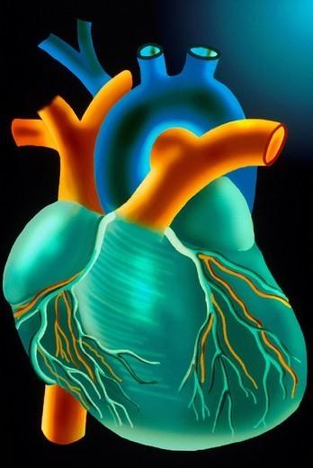Stock Photo: 824-47984 HEART, ILLUSTRATION