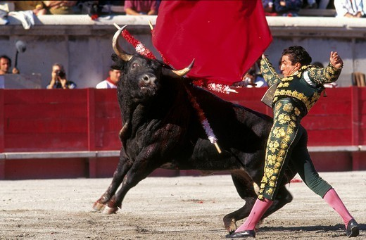 Stock Photo: 824-49165 BULL FIGHT. BULL FIGHT The corrida in Nîmes, France.