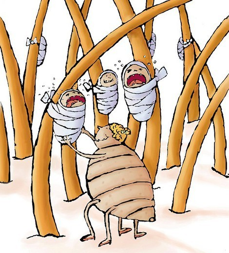 LOUSE DRAWING. Representation of lice here baby lice. : Stock Photo