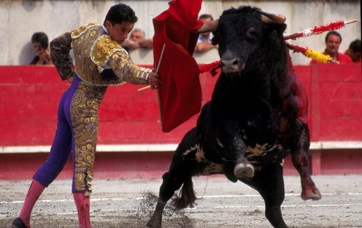 Stock Photo: 824-52043 BULL FIGHT. BULL FIGHT The corrida in Nîmes, France.