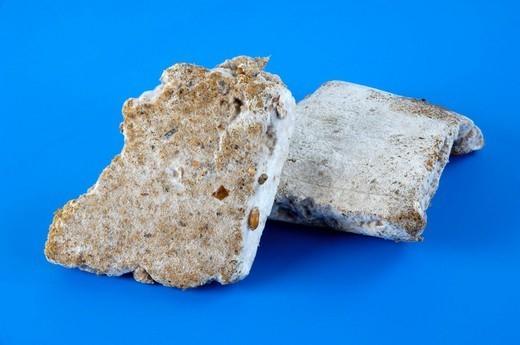 OYSTER MUSHROOM CULTURE. Worldwide distribution except for United Kingdom and Germany. King oyster mushroom Pleurotus eryngii : culture medium with mycelium. : Stock Photo