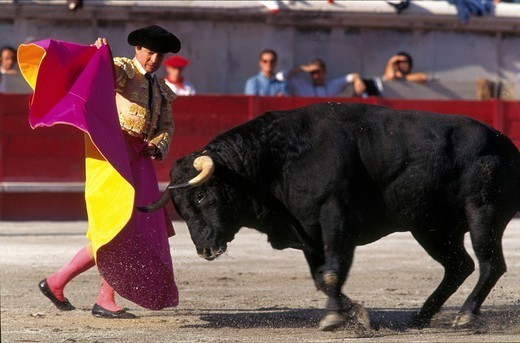 BULL FIGHT. BULL FIGHT The corrida in Nîmes, France. In bullfighting, the ´veronica´ is a pass in which the matador slowly swings the cape while holding it with both hands in such a manner that the charging bull passes alongside him. : Stock Photo